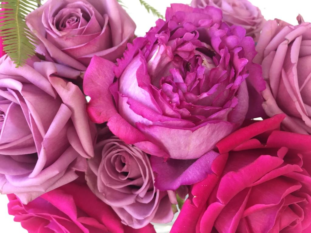 Frische Blumen Rosen pink Frühling