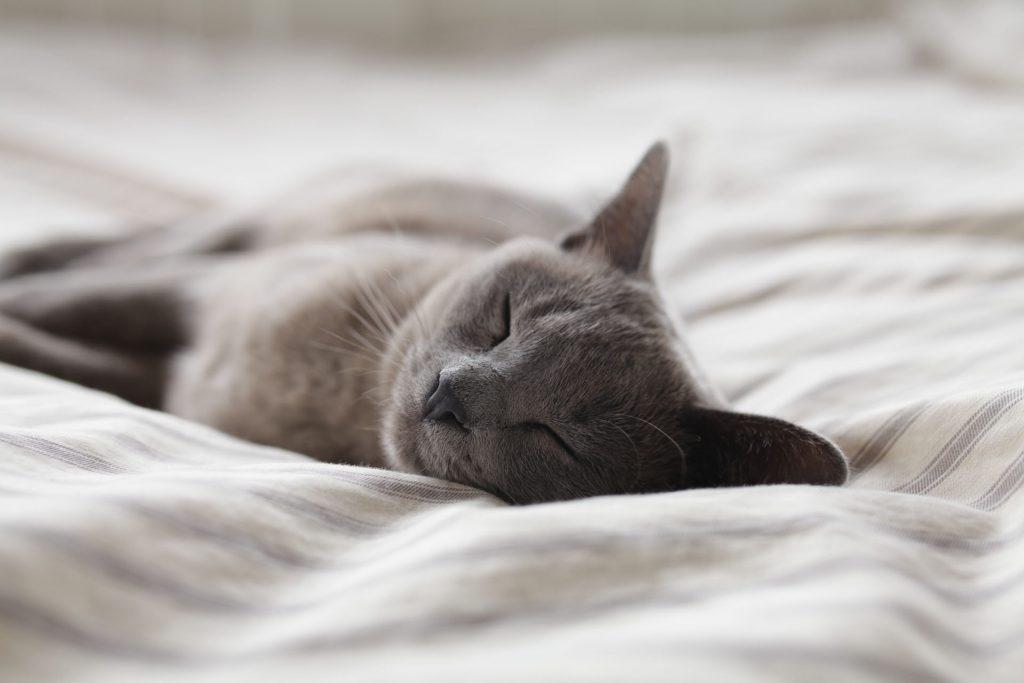 Gut schlafen durch passende Matratze