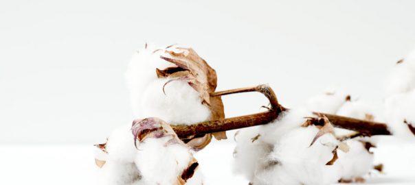 Der Qualitätsstoff Baumwolle