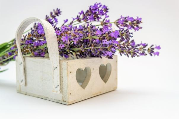 Lavendel in einer Kiste